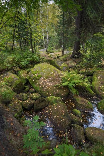 Bosque silvestre Foto Premium