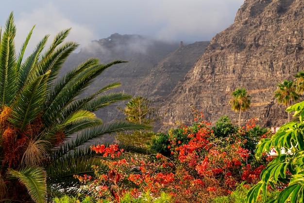 Bosque tropical colorido con montaña Foto gratis
