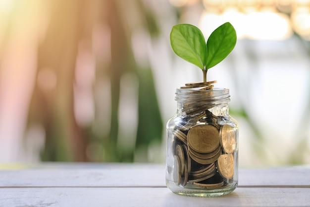 Botella de cristal para poner el dinero y tener la hoja de plantas de semillero en piso de madera. Foto Premium