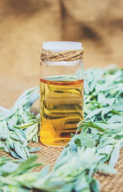 Botella pequeña de aceite esencial de ajenjo (tintura de hierbas, infusión, extracto) Foto Premium