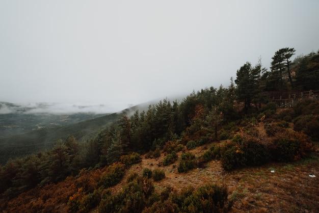 Brumosa mañana en un bosque de otoño Foto Premium