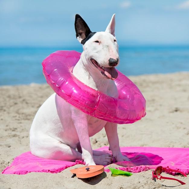Bull terrier en la playa Foto Premium