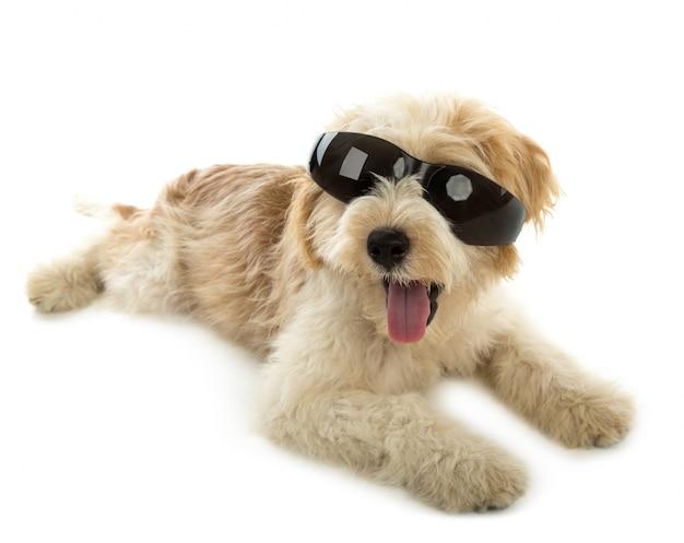 Cachorro De Perro En El Vidrio Aislado En El Fondo Blanco