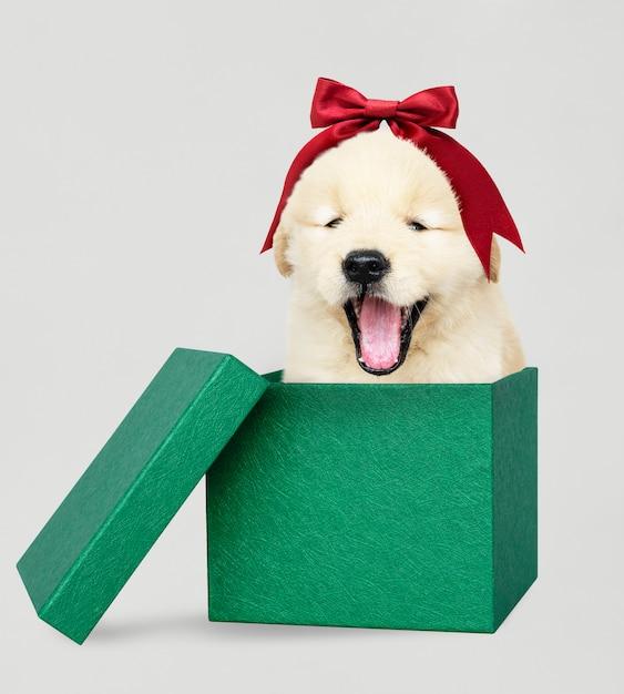 Cachorro de golden retriever en una caja de regalo de navidad verde Foto gratis