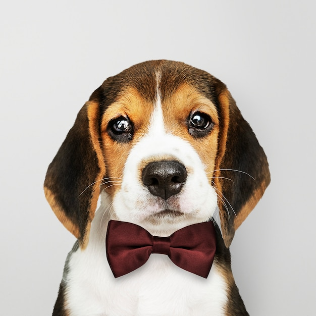 Cachorro con pajarita Foto gratis