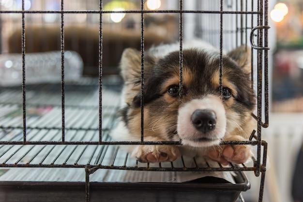 Cachorro tan lindo durmiendo solo en el perro de la jaula con tristeza y  solitario | Foto Premium