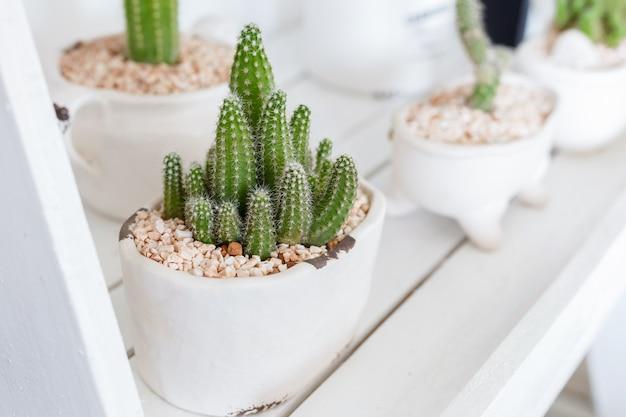 Cactus en estante blanco Foto Premium