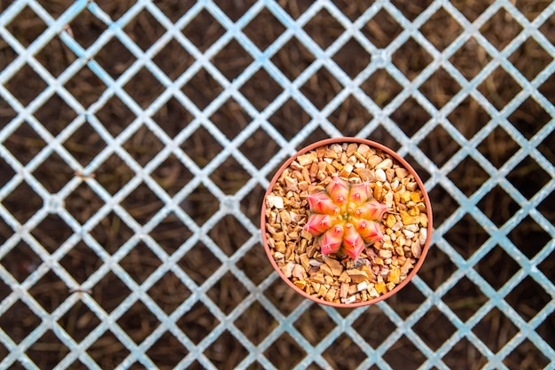 Cactus en mercado de flores Foto Premium