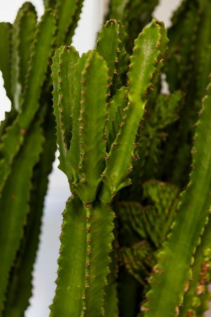 Cactus de oficina Foto gratis