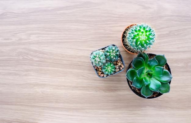 Cactus Y Plantas Suculentas En El Fondo De Madera Con
