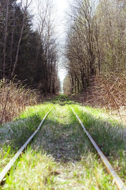 Calibre estrecho en el bosque Foto Premium