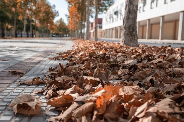 Calle con hojas caídas en el suelo y árboles al fondo. Foto Premium