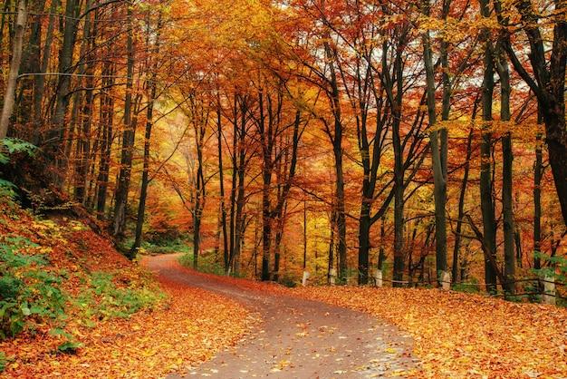 Callejón de otoño mundo de la belleza. montes de cárpatos. Foto Premium