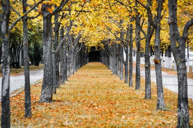 Callejón de otoño parque Foto Premium