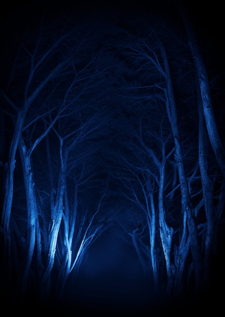 Callejón del parque de los árboles viejos fantasmagóricos Foto gratis