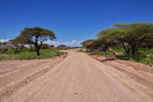 Camino a la aldea de bosquimanos, áfrica Foto Premium