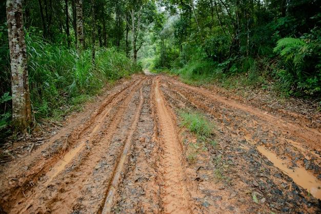 Camino de barro en el bosque Foto Premium