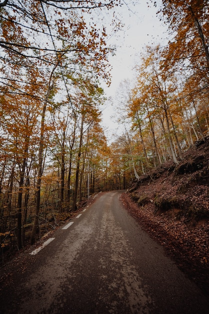 Camino en el bosque Foto Premium