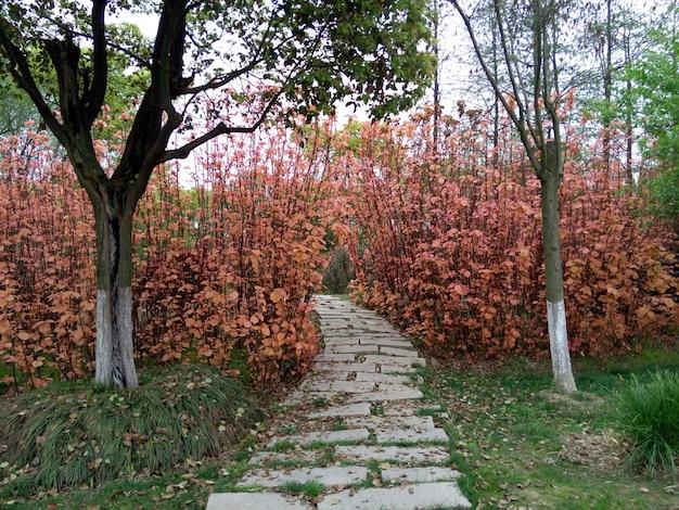 camino de piedra en el jard n descargar fotos gratis