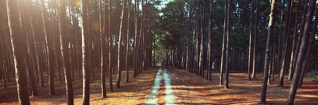 Camino forrest rural trail nature concept Foto gratis