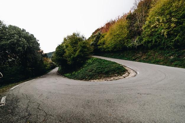 Camino local del bosque Foto Premium