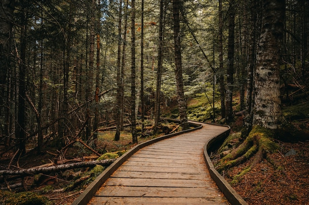 Camino de madera dentro de un bosque Foto Premium