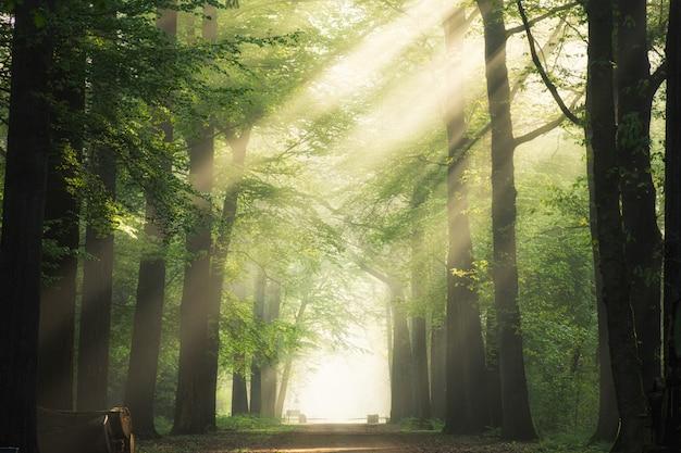Camino en medio de los árboles de hojas verdes con el sol brillando a través de las ramas Foto gratis