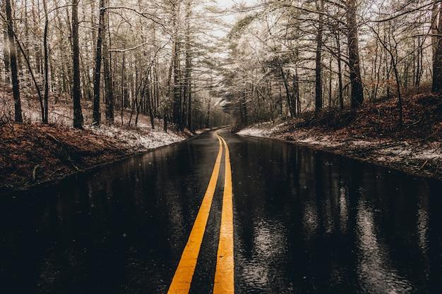 Camino mojado en el bosque Foto gratis