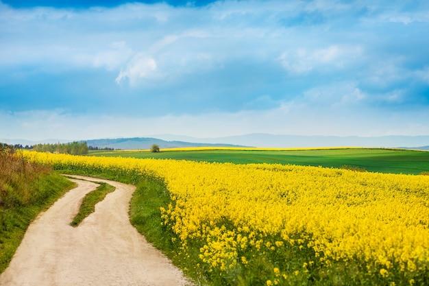 Camino de tierra junto a campos de colza en flor Foto gratis