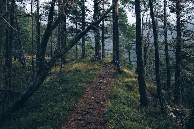 Camino de tierra rodeado de árboles Foto gratis