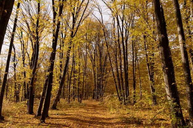 Camino a través del bosque de otoño Foto gratis