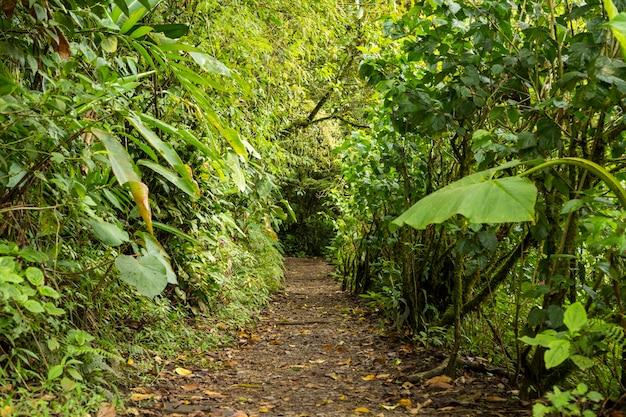 Camino vacío junto con árbol verde en la selva Foto gratis