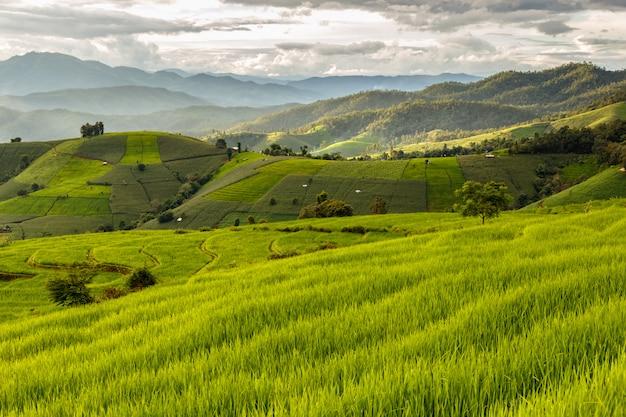 Campo de arroz en terrazas verdes en pa pong pieng, mae chaem, chiang mai, tailandia Foto Premium