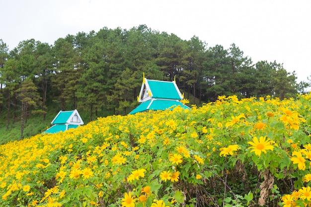 Campo de flor amarilla Foto Premium