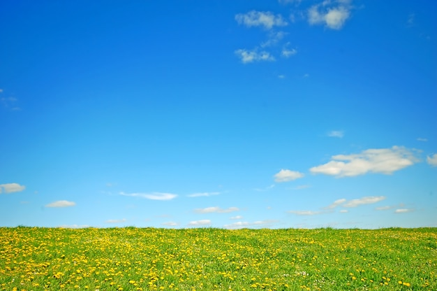 Campo con flores amarillas y el cielo azul Foto gratis