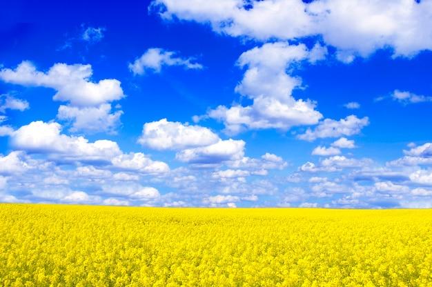 Campo con flores amarillas y nubes Foto gratis
