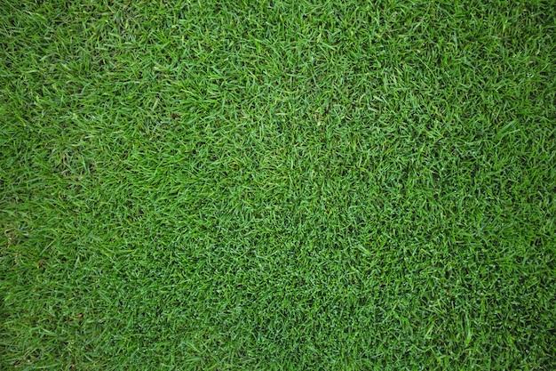 Campo de hierba verde de fondo Foto gratis