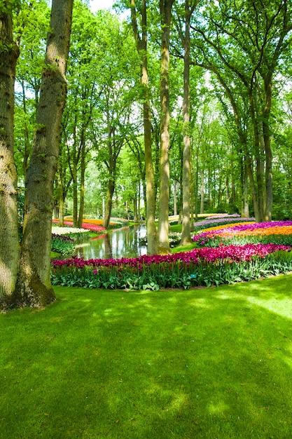 Campo de tulipanes en los jardines de keukenhof, lisse, países bajos Foto gratis
