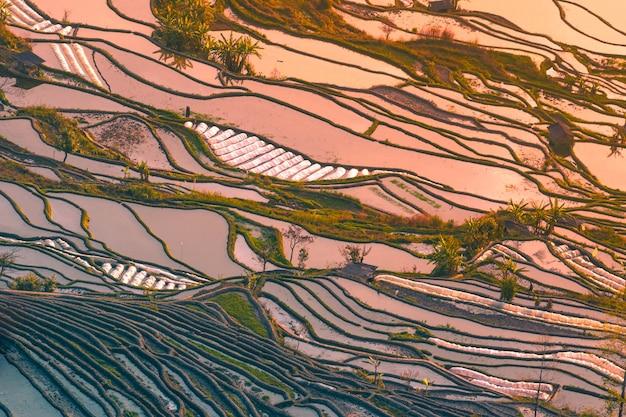 Campos De Arroz Hani En Terrazas De Yuanyang China Durante