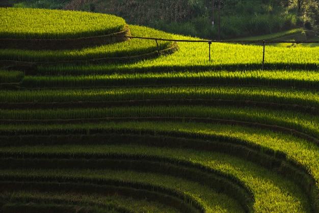Campos De Arroz En La Terraza De Mu Cang Chai Yenbai