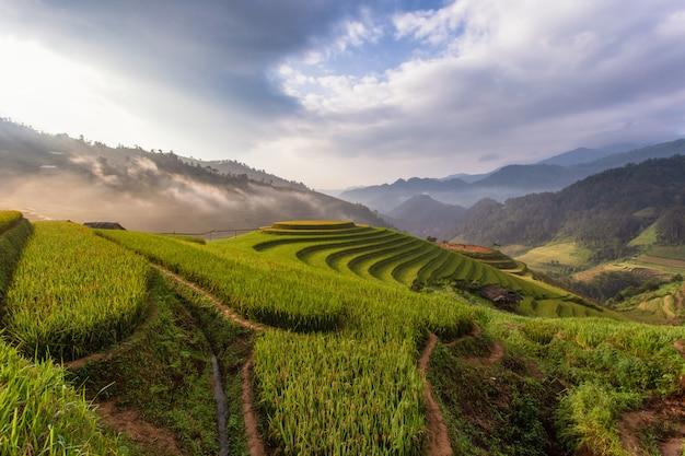 Campos de arroz en terrazas verdes en mu cang chai Foto Premium