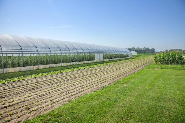 Campos y un invernadero Foto gratis