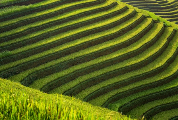 Capa De Campos De Arroz En La Terraza De Mu Cang Chai