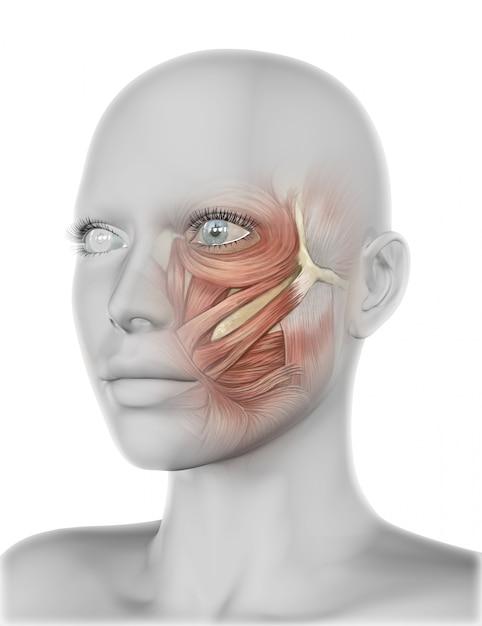 Cara femenina 3d con músculos de la mejilla   Descargar Fotos premium