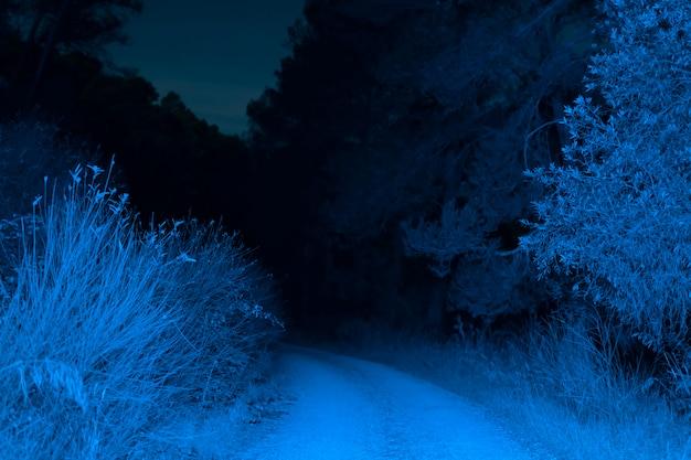 Carretera iluminada en bosque en la noche Foto gratis