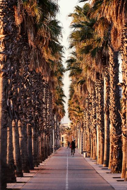 Carril bici entre palmeras Foto Premium