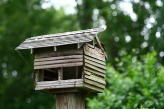 Casa del p jaro del rbol descargar fotos gratis for Immagini del piano casa gratis