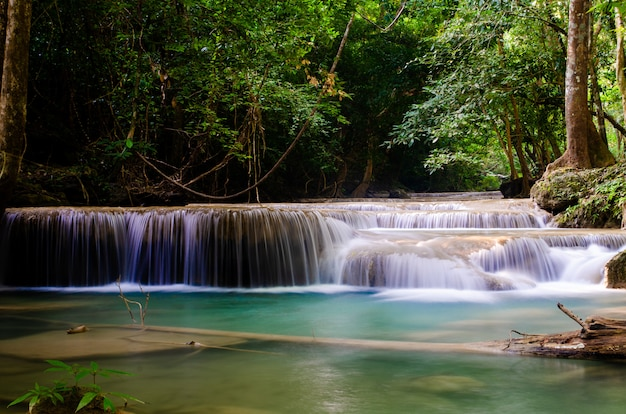 Cascada en bosque profundo Foto Premium