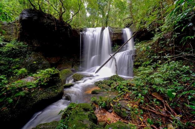 Cascada en el bosque Foto Premium