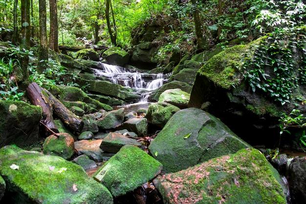 Cascada entre naturaleza verde musgo y roca. Foto Premium